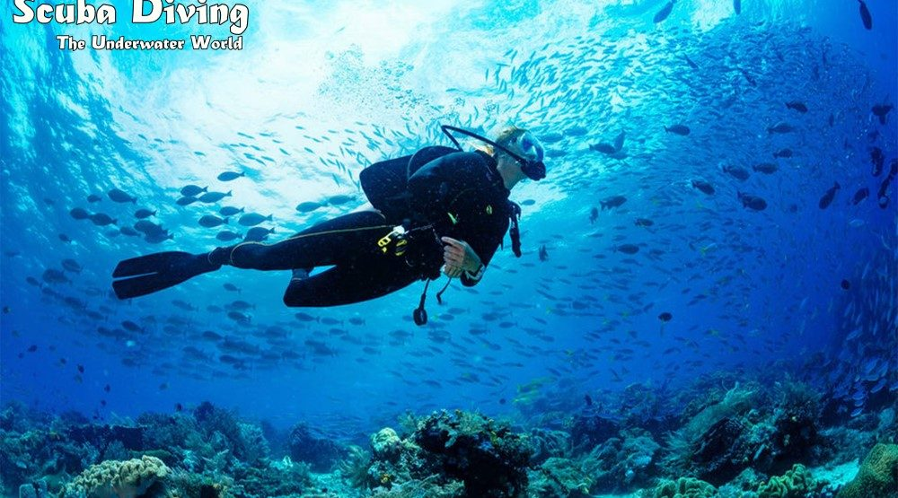 Scuba Diving The Underwater World